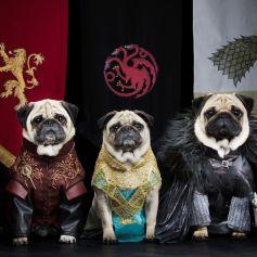 He aquí un carlino que siempre paga sus deudas, una Khaleesi con sangre de dragón a la que es mejor no enfadar y un tercero que... no sabe nada.