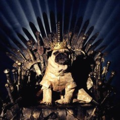 En el juego de tronos o ganas o mueres. No es por nada pero este amiguito tiene motivos para estar de los nervios.