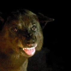 Lo matan los Umber para demostrar que tienen a Rickon y nosotros seguimos sin entender que manía tienen en esta serie con matar huargos.