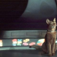 Jake - El gato que vino del espacio